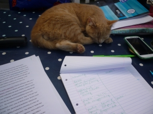 7 1st April 2015 Organising my conclusion, with moral support from Hamish!